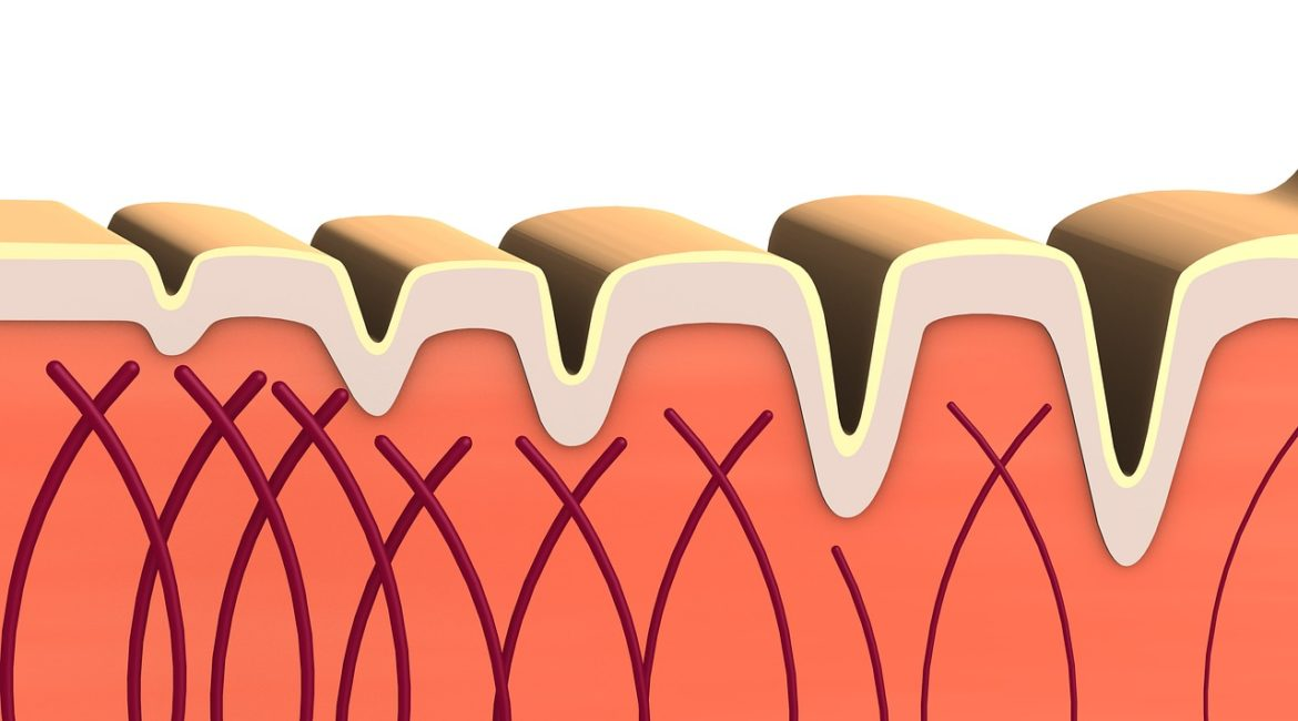 Importance Of Collagen